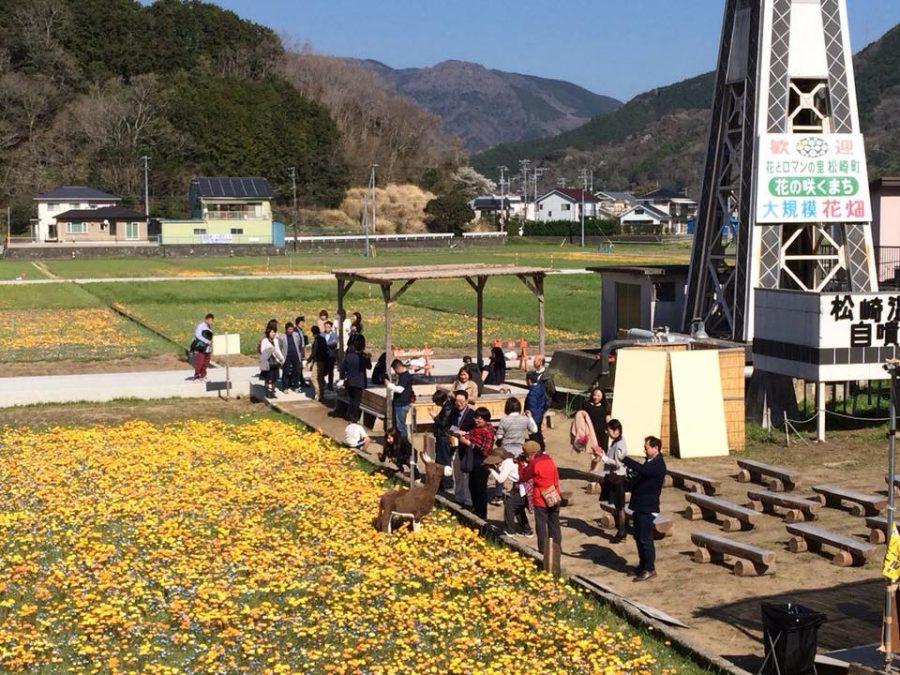 3/25(日)「田んぼをつかった花畑」、「那賀川沿いの桜並木」の開花情報です。